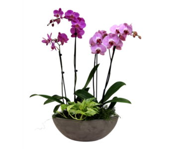 Newport Orchid Garden  in Detroit and St. Clair Shores MI, Conner Park Florist
