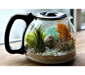 Succulent Coffee Pot in Oliver BC, Flower Fantasy & Gifts