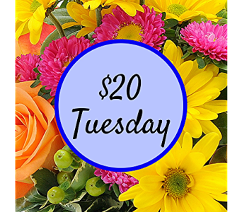 $20 Tuesday in Kingwood TX, Flowers of Kingwood, Inc.