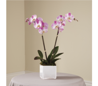 The FTD Pink Orchid Planter in Southfield MI, Thrifty Florist