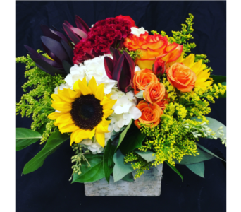 BOSTON�S BLOSSOMS IN BIRCH in Needham MA, Needham Florist
