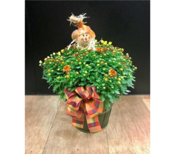 Hardy Fall Mum  in Fargo ND, Dalbol Flowers & Gifts, Inc.