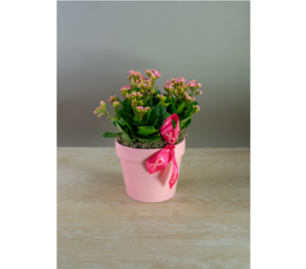 Kalanchoe - Breast Cancer Awareness in Little Rock AR, Tipton & Hurst, Inc.