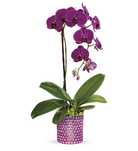 Teleflora's Dazzling Orchid in Los Angeles CA, RTI Tech Lab