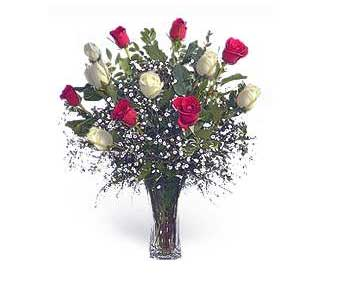 Stein Dozen Red and White Roses in Burlington NJ, Stein Your Florist