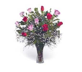 Stein Dozen Red & Pink Roses in Burlington NJ, Stein Your Florist