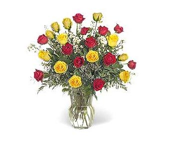 Stein Two Dozen Red & Yellow in Burlington NJ, Stein Your Florist