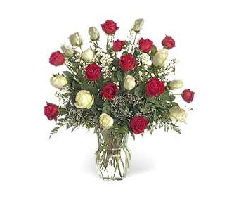 Stein Two Dozen Red & White in Burlington NJ, Stein Your Florist