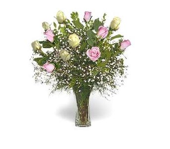 Stein Dozen Pink & White Roses in Burlington NJ, Stein Your Florist