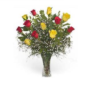 Stein Dozen Red & Yellow Roses in Burlington NJ, Stein Your Florist