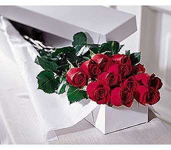12 Red Roses Boxed in Toronto ON, The Flower Nook