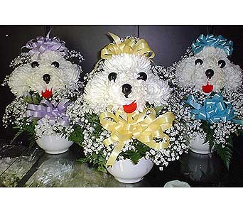 Stien Poodle Head in Burlington NJ, Stein Your Florist
