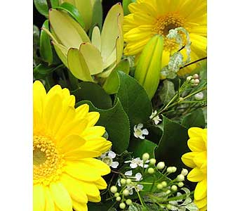 YELLOW CUT FLOWERS BOUQUET in Etobicoke ON, VANDERFLEET Flowers