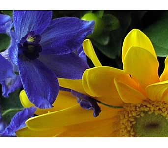 BLUE & YELLOW CUT FLOWERS in Etobicoke ON, VANDERFLEET Flowers