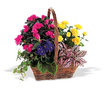 Walter Knoll's Blooming Garden Basket in St. Louis MO, Walter Knoll Florist