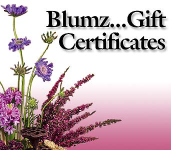 Blumz... Gift Certificates in Ferndale MI, Blumz...by JRDesigns