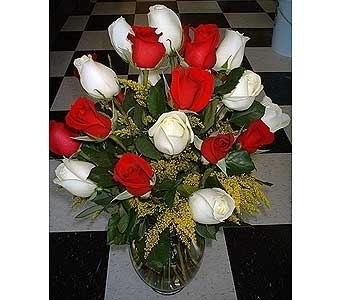 Peppermint Roses with solidago- 2 Dozen in Dallas TX, Z's Florist