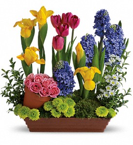 Spring Favorites in Jacksonville FL, Deerwood Florist