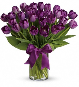 Passionate Purple Tulips in Bowmanville ON, Bev's Flowers