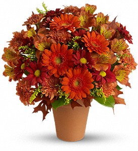 Golden Glow in Burlington NJ, Stein Your Florist