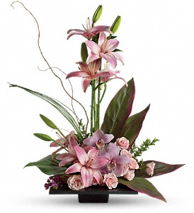 Imagination Blooms with Cymbidium Orchids in Amherst NY, The Trillium's Courtyard Florist