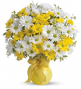 Teleflora's Upsy Daisy in Winnipeg MB, Hi-Way Florists, Ltd