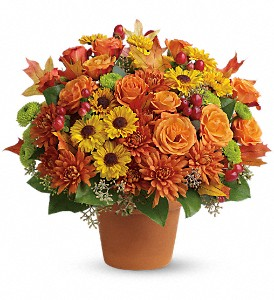 Sugar Maples in Nutley NJ, A Personal Touch Florist