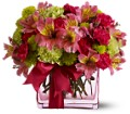 Teleflora's Cheers To You in Fredonia NY Fresh & Fancy Flowers & Gifts