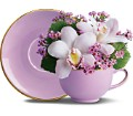 Orchid Teacup Bouquet by Teleflora in New Britain CT Weber's Nursery & Florist, Inc.