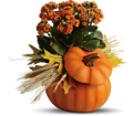 Teleflora's Harvest Pumpkin in San Clemente CA Beach City Florist