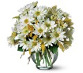 Daisy Cheer in San Clemente CA Beach City Florist