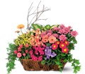 Deluxe European Garden Basket in San Clemente CA Beach City Florist