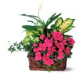 Azalea Attraction Garden Basket in San Clemente CA Beach City Florist