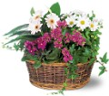 Traditional European Garden Basket in Big Rapids MI Patterson's Flowers, Inc.