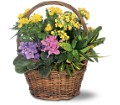 Petite European Basket in San Clemente CA Beach City Florist