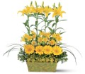 Yellow Garden Rows in Orlando FL Orlando Florist