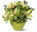 Shades of Green in Hollywood FL Al's Florist & Gifts