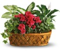Plants Galore in Tuscaloosa AL Pat's Florist & Gourmet Baskets, Inc.