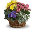 Spring Has Sprung Mixed Basket in Beaumont TX Blooms by Claybar Floral