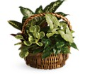 Emerald Garden Basket in Beaumont TX Blooms by Claybar Floral