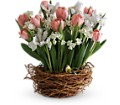 Tulip Song in New York NY Fellan Florists Floral Galleria