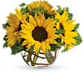 Sunny Sunflowers in Homer NY Arnold's Florist & Greenhouses & Gifts