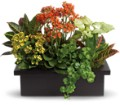 Stylish Plant Assortment in Benton Harbor MI Crystal Springs Florist