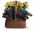 Garden To Go Basket in New York NY Fellan Florists Floral Galleria
