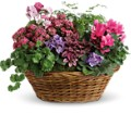 Simply Chic Mixed Plant Basket in Bloomington IL Forget Me Not Flowers