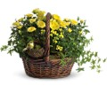 Yellow Trio Basket in Oshkosh WI Flowers & Leaves LLC