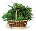 Large Basket Garden in Grand Falls/Sault NB Grand Falls Florist LTD