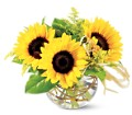 Teleflora's Sassy Sunflowers in Fredonia NY Fresh & Fancy Flowers & Gifts