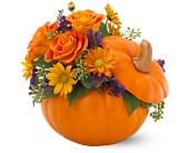Teleflora's Pumpkin Patch Bouquet in Christiansburg VA, Gates Flowers & Gifts