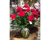 Rona Roses in Peachtree City GA, Rona's Flowers And Gifts